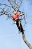 Bayside Tree Removal Service
