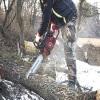 Ladue Tree Service
