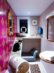One of our Luxurious Cat Suites
