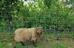 Livestock Fences