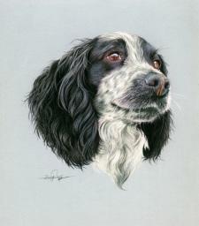 Blue Roan Spaniel Pet Portrait Painting