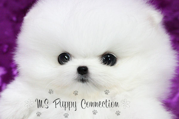 Ms Puppy Connection 112 Wendy Lane, Madison, MS, 39110