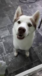 Meet Pressley Looking Fresh After A Dog Groom