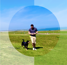 Dog trainer South Shields | Newcastle | Sunderland
