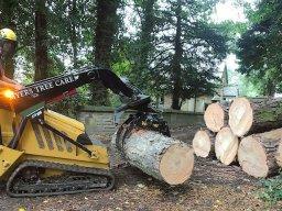 Tree Surgeons Stockport