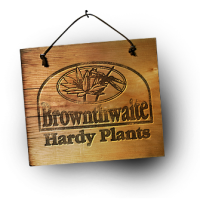 Brownthwaite Hardy Plants