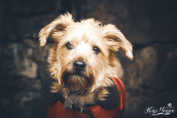 Furry Friends Session