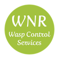 Wasp Exterminator Shropshire