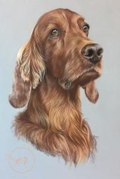 Irish Red Setter Pet Portrait Dog Drawing
