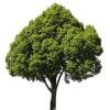 Grace Tree Service Spokane