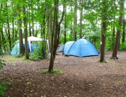 Upper woods camping zone