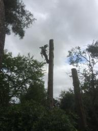 tree removal in west sussex by Head4Heights