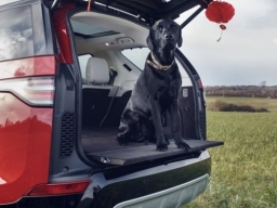 TOP LEASE SUV's DEALS FOR DOG LOVERS MAKE SURE THAT YOUR FURRY FRIEND HAS ENOUGH ROOM WOOF WOOF !!!  CALL CARSAVE LEASING 0114 2582888