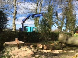 Tree removal in Northumberland due to root damage