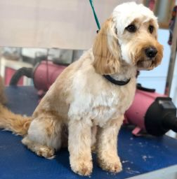 dog grooming winchester