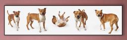 Chester- Dog Portrait