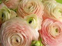 Petals From Paula