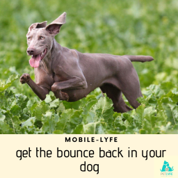 Get The Bounce Back in Your Dog