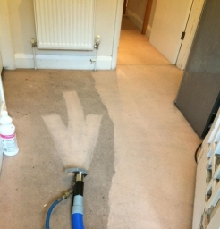Very Dirty Carpet In Process Of Cleaning Amazing Differance