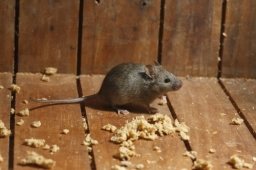 Mouse control Dorset and Hampshire