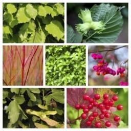 Mixed hedge packs