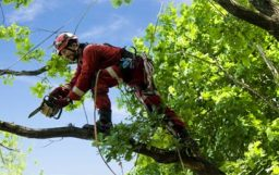 tree surgeon quotes