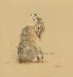 Grooming Hare Drawing Hare Painting