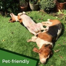 dog friendly artificial grass by wonderlawn
