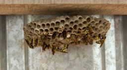 Wasp nest control Dorset and Hampshire