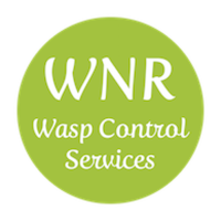 Wasp Control Hampshire