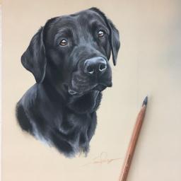 Black Labrador Pet Portrait Painting