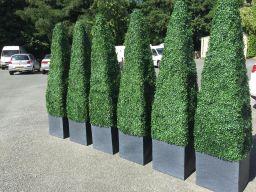 Bespoke artificial hedge pyramids