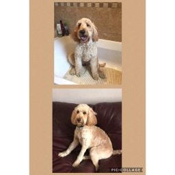 Beautiful Abby After her groom