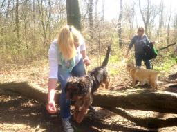 Winchester dog walker walking dogs