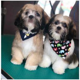 Dog Grooming Stockport
