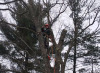 Tree Guy Services