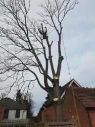 Bucks Tree Surgeons