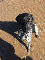 Customer's Dog - Hoylake Beach Wirral, Merseyside.