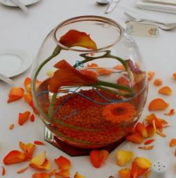 Fish Bowls available for hire