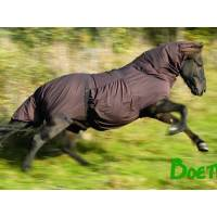 Itchy Horse