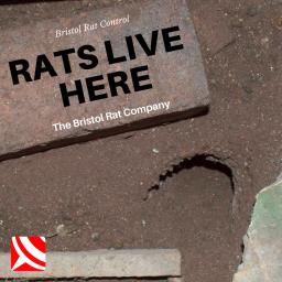 rat control bristol
