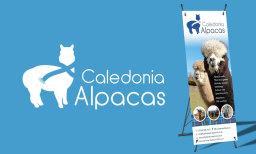 Logo/branding/design for Caledonia Alpacas