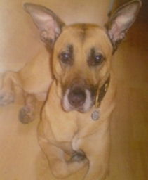 Miss my Harley boy / top dog Nottingham .