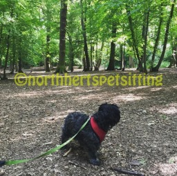 dog walker hitchin north herts pet sitting