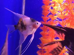 Livestock Fish Bristol Tropical & Coldwater