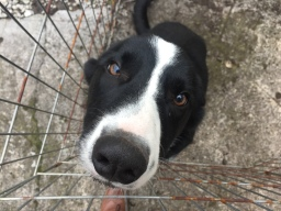 Aaron - Border Collie - Customers Dog - West Kirby