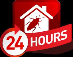 24 hour pest control