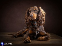 Pet Portrait Photographer Stratford upon Avon