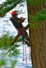 FS Tree Services