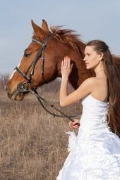 Horse and wedding